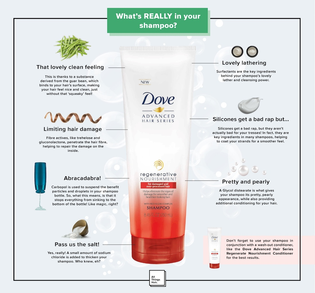 shampoo ingredients infographic